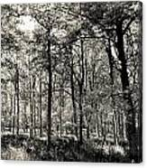 A English Forest Canvas Print