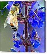 A European Honey Bee And It's Flowers Canvas Print
