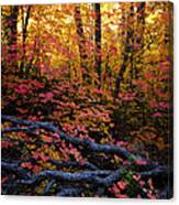 A Fall Forest  Canvas Print