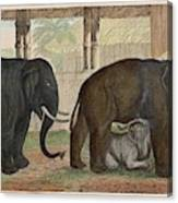 A Family Of Indian Elephants Canvas Print