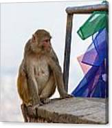 A Female Macaque On Top Of Wall Canvas Print