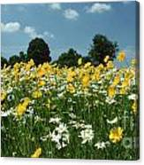 A Field Of Spring Canvas Print