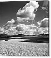 A Field Of Wheat. Limagne. Auvergne. France Canvas Print