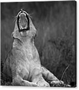 A Fierce Yawn Canvas Print