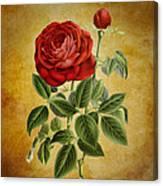 A Fifth Vintage Rose Canvas Print