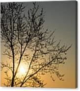A Filigree Of Branches Framing The Sunrise Canvas Print