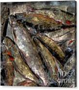 A Fine Catch Of Trout - Steel Engraving Canvas Print