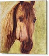A Fine Horse Canvas Print
