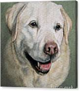 A Fine Old Lady Yellow Labrador Portrait Canvas Print