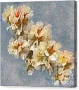 A Flourishing Cherry Branch Canvas Print