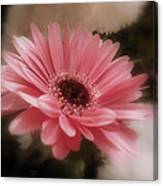 A Flower For Brooke Canvas Print