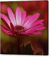 A Flower In A Shadow  Canvas Print