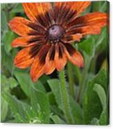 A Flower Within A Flower Canvas Print