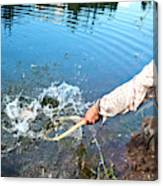 A Fly Fisherman Pulls A Fish Canvas Print