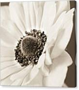 A Focus On The Details Canvas Print