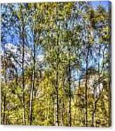 A Forest Glade Canvas Print