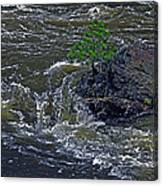 A Forest Of One Canvas Print