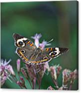 A Friendly Butterfly Smile Canvas Print