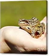 A Frog In The Hand Canvas Print