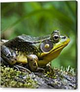 A Frog Is Forever Canvas Print