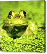 A Frogs Day Canvas Print