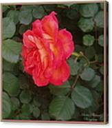 A Gem On The Vine Canvas Print