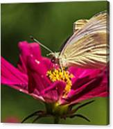 A Georgous Butterfly Macrophotography Canvas Print