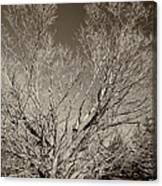 A Giant Sleeps Sepia Canvas Print