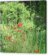 A Glimpse Of Poppies Canvas Print
