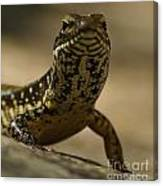 A Golden Skink Canvas Print