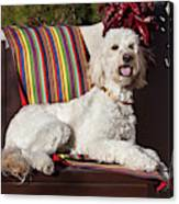 A Goldendoodle Lying On A Garden Bench Canvas Print