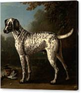 A Grey Spotted Hound Canvas Print