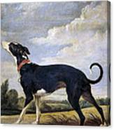 A Greyhound Lurking Canvas Print