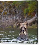 A Grizzly Cub Fishing Canvas Print