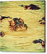 A Group Of Hippos In A River. Tanzania Canvas Print