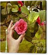 A Hand And A Camellia Canvas Print