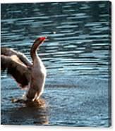 A Happy Goose Canvas Print