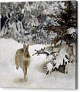A Hare In The Snow Canvas Print
