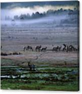 A Heard Of Elk Graze In A Misty Meadow Canvas Print