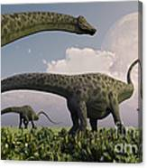 A Herd Of Diplodocus Sauropod Dinosaurs Canvas Print