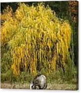 A Horse And A Willow Tree Canvas Print