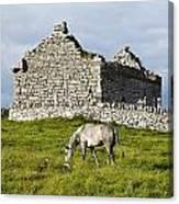 A Horse Grazing In A Field Canvas Print