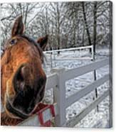 A Horse Is A Horse Canvas Print