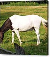 A Horse Named Dipstick Canvas Print