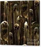 A Jungle Of Ferns Canvas Print
