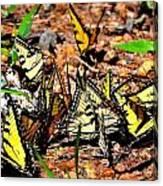 A Kaleidoscope Of Butterflies Canvas Print