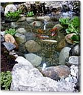 A Koi Pond For Outdoor Garden Canvas Print