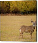 A Large Whitetail Buck Stairs Canvas Print