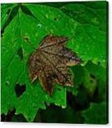 A Leaf Upon A Leaf Canvas Print