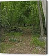A Leisurely Stroll Through The Putnam County Veteran Memorial Park Woods Canvas Print